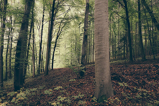 Get out of the accounts payable process woods and see the breathtaking forest it can be!