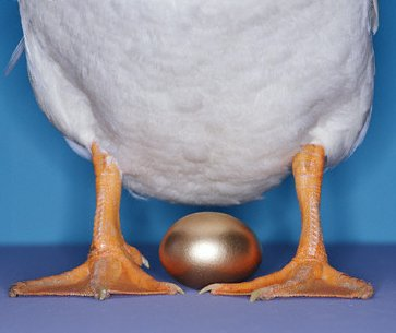 Accounts Payable process automation, especially virtual card payments, are the goose that laid the golden egg!